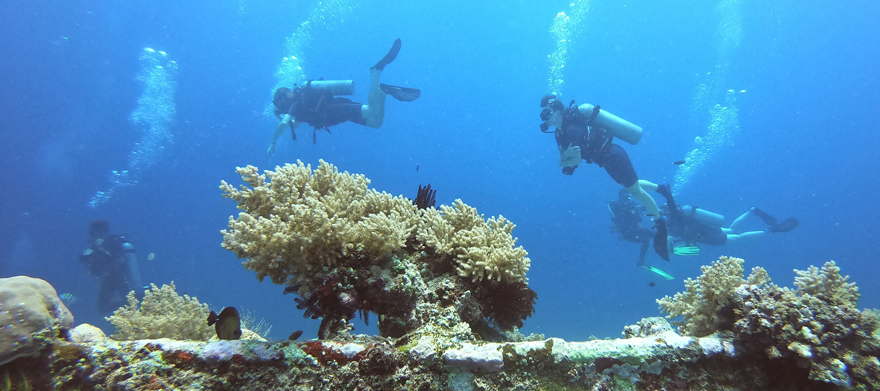 diving in gili nanggu waters