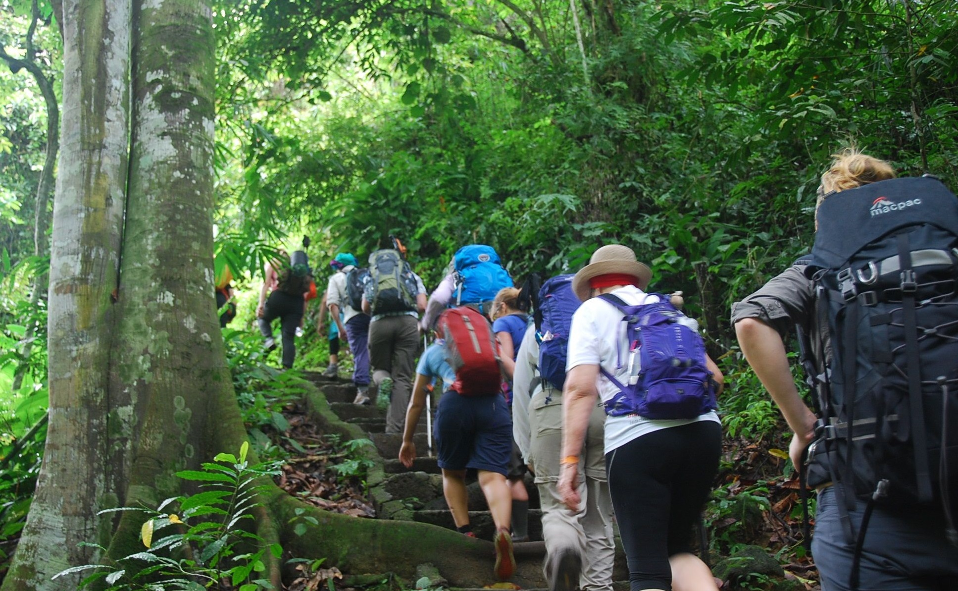 jungle trekking adventure