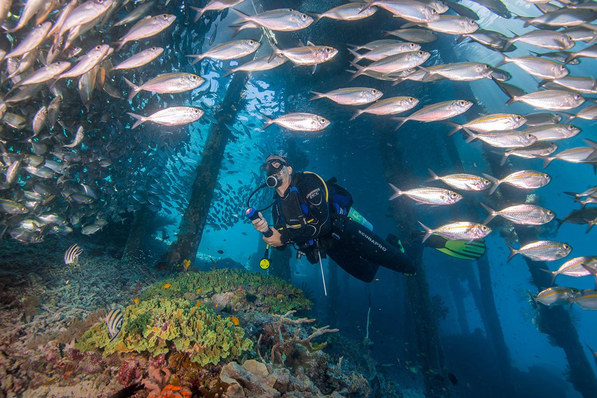 raja ampat stunning underwater scenery