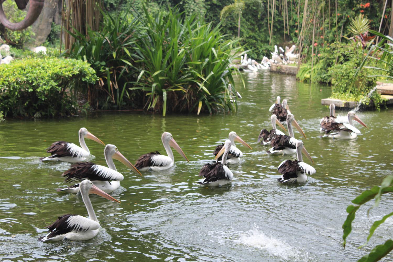 Ragunan Wildlife Park in jakarta