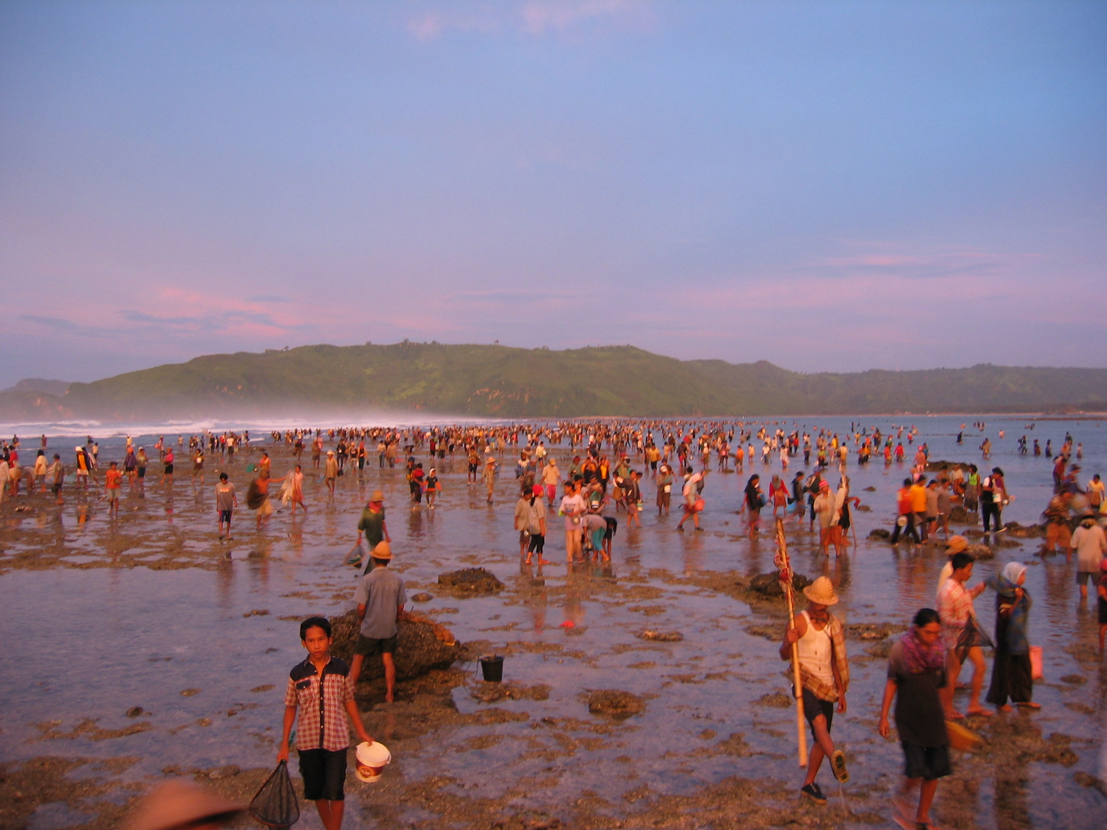 catching sea worms in bau nyale festival in lombok