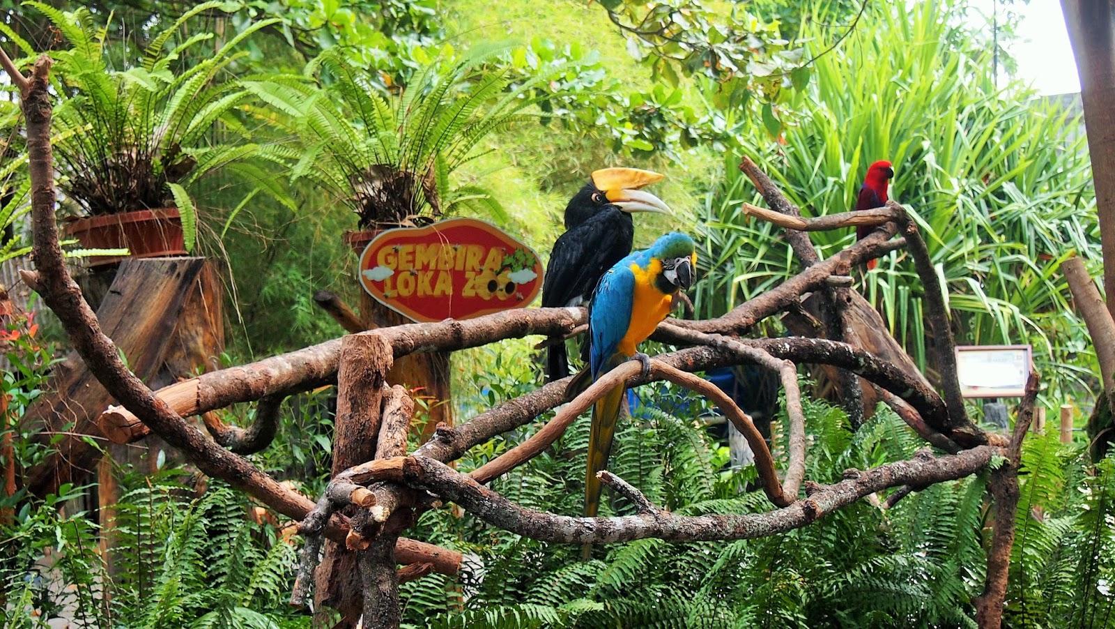 gembira loka zoo in yogyakarta is worth to visit