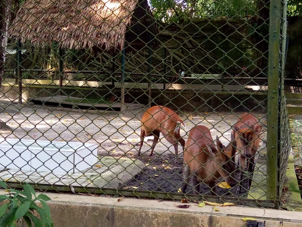 holiday to pematang siantar zoo in north sumatra