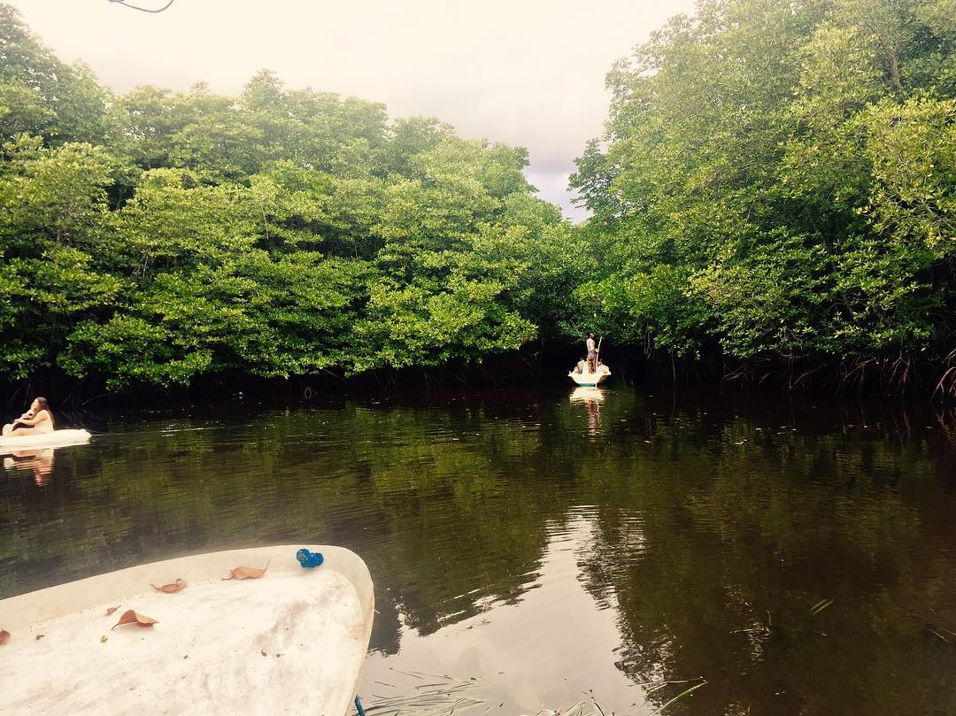 lembongan mangrove forest