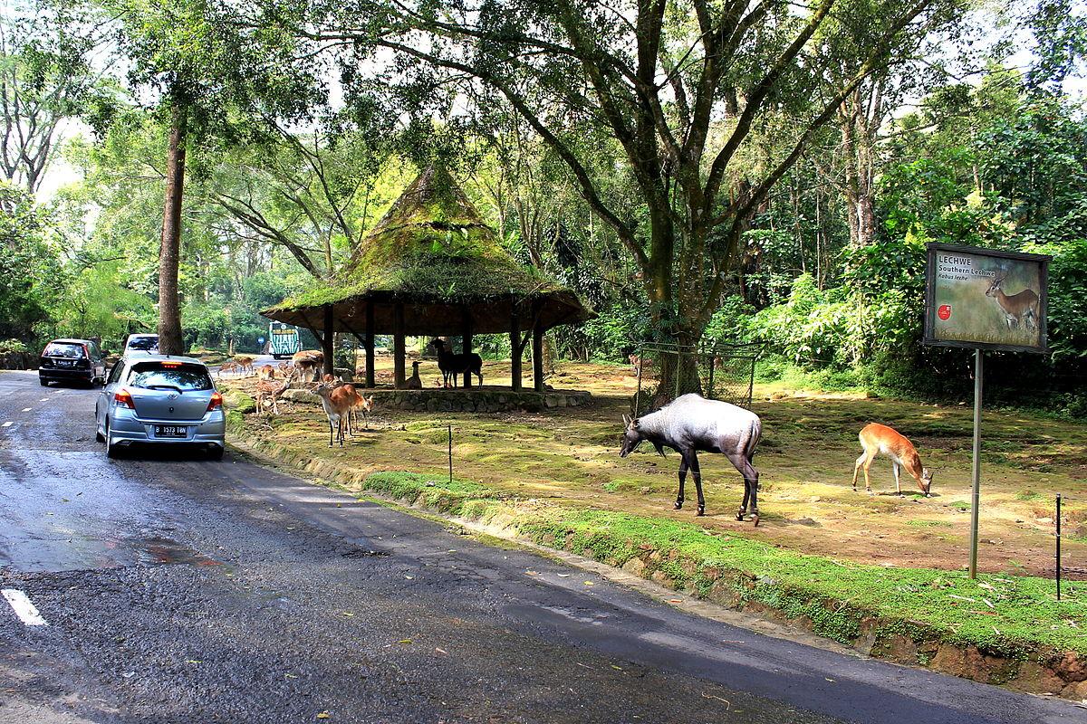 taman safari indonesia bogor zoo