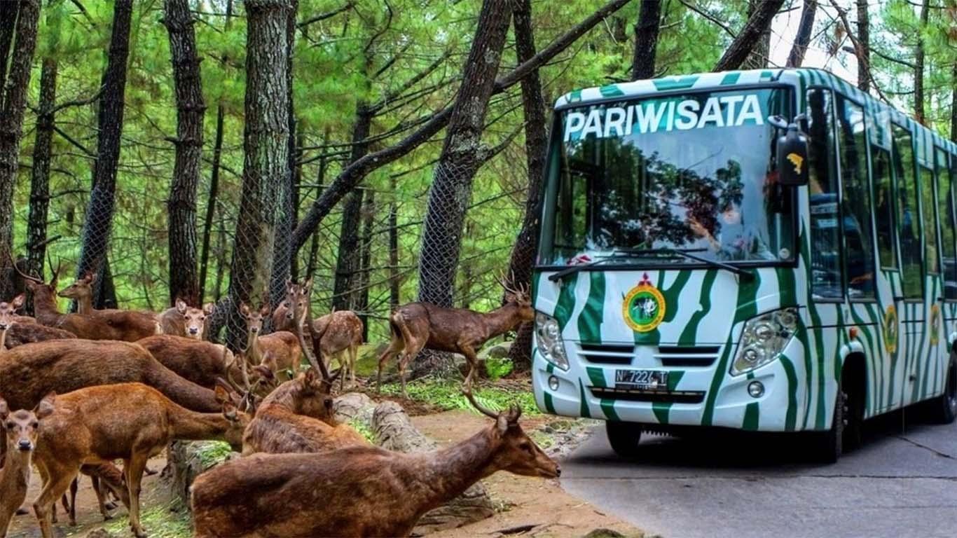 taman safari indonesia prigen zoo