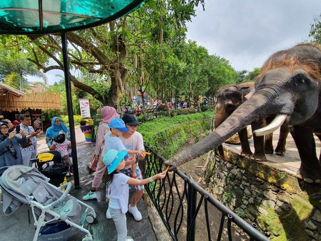 8 Best Zoos In Indonesia Authentic Indonesia
