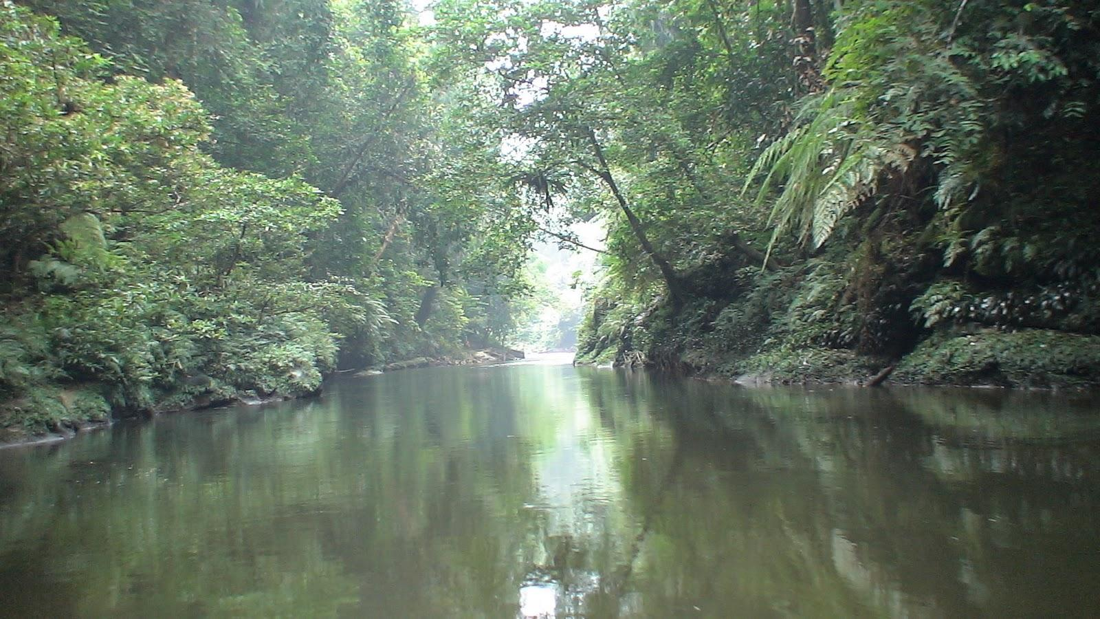 Bukit Tigapuluh National Park holds valuable extraordinary flora and fauna