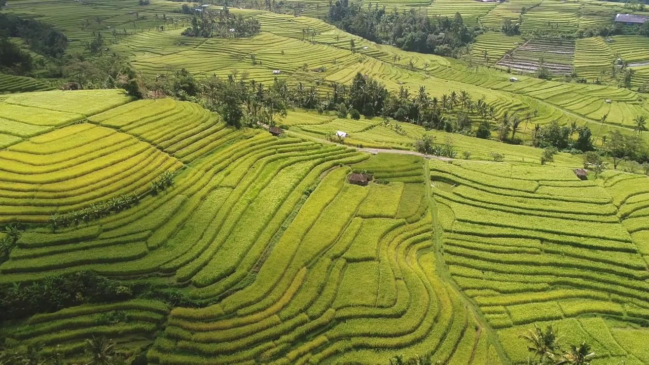 Jatiluwih Rice Terrace in Bali