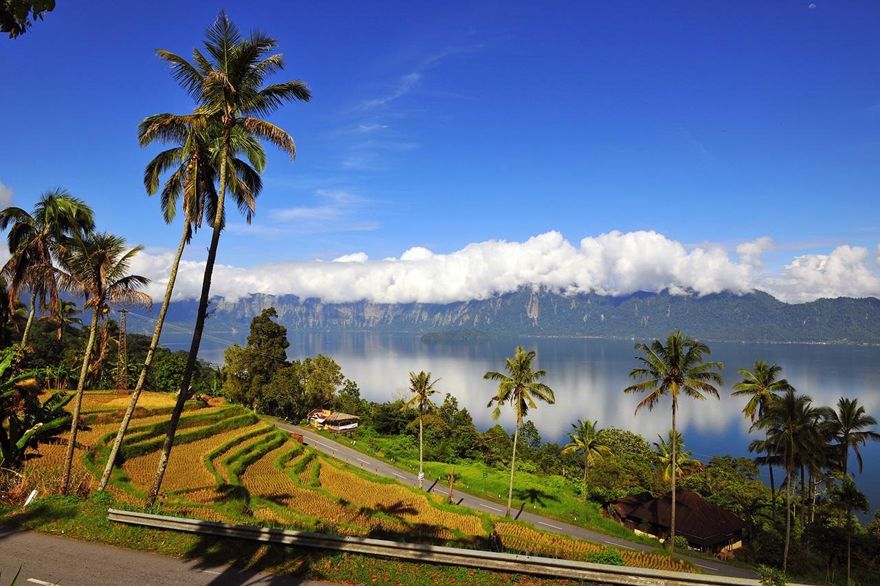 Maninjau Lake Rice Terrace in West Sumatra