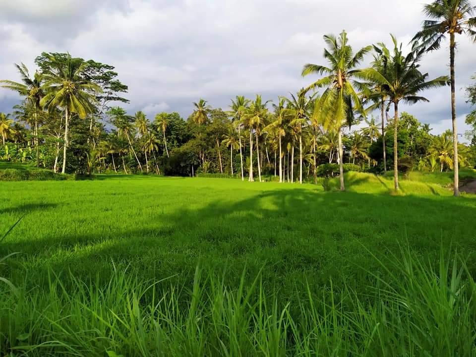 Ricefield trek