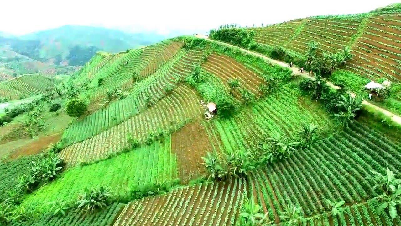 beautiful panyaweuyan rice terrace