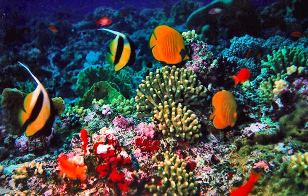 karimunjawa coral