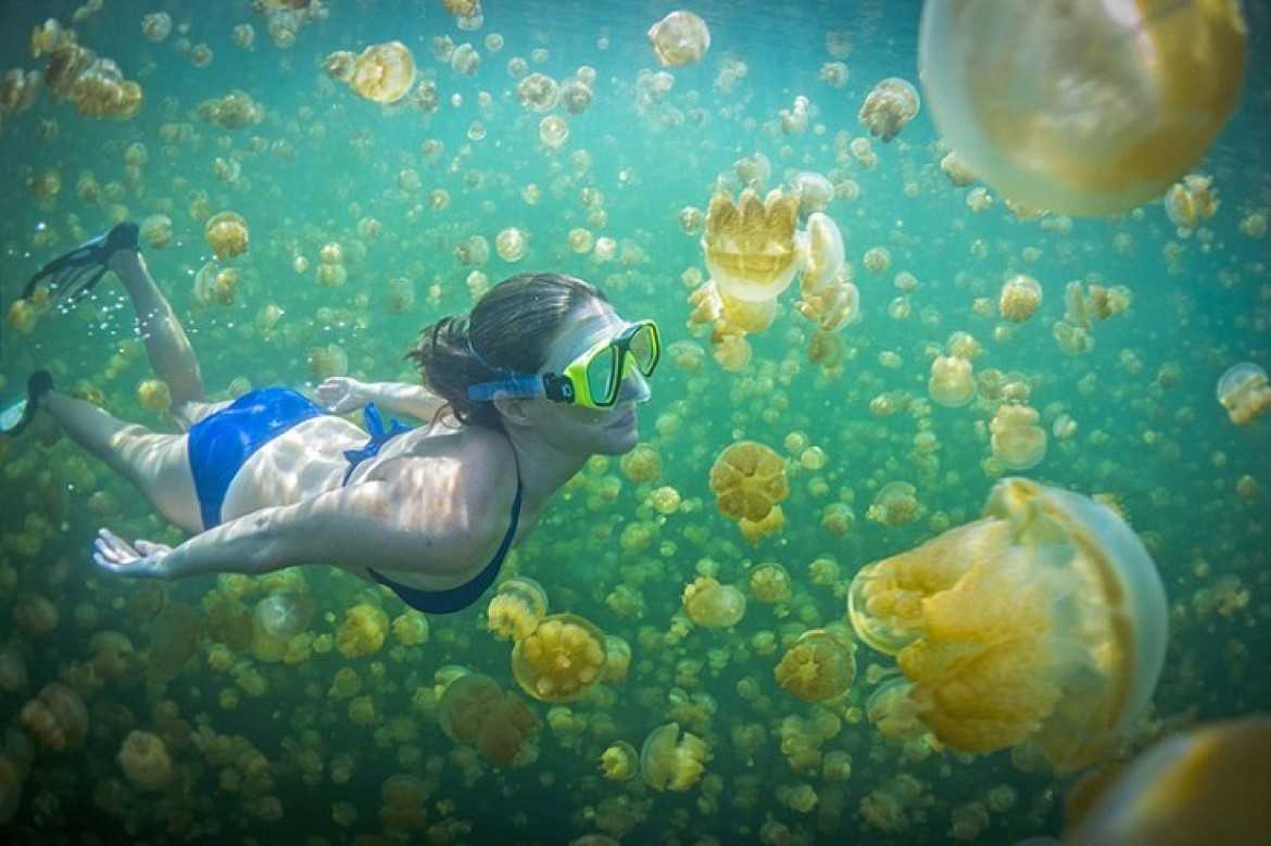 swim with stingless Jellyfish in kakaban lake