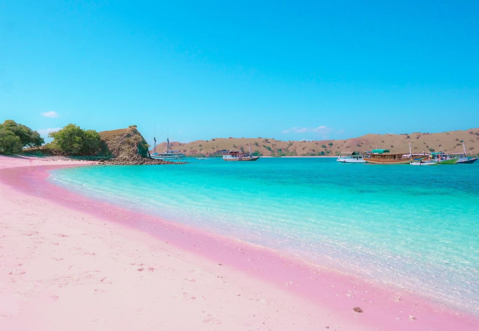 the pink komodo beach