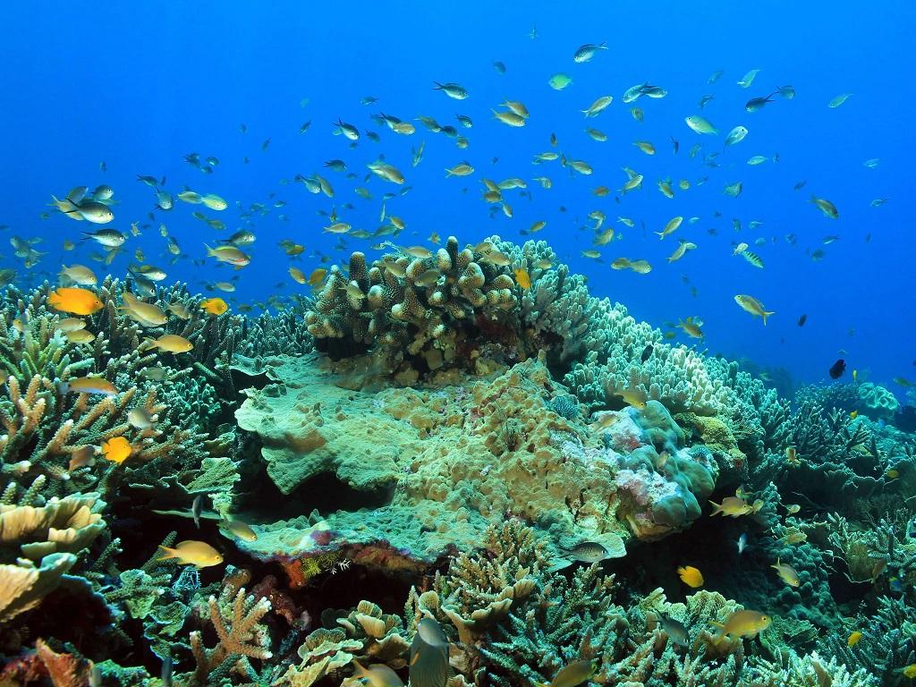 the koaba island biodiversity