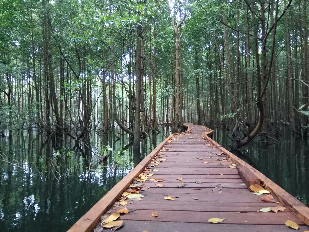 mangrove forest in kutai national park