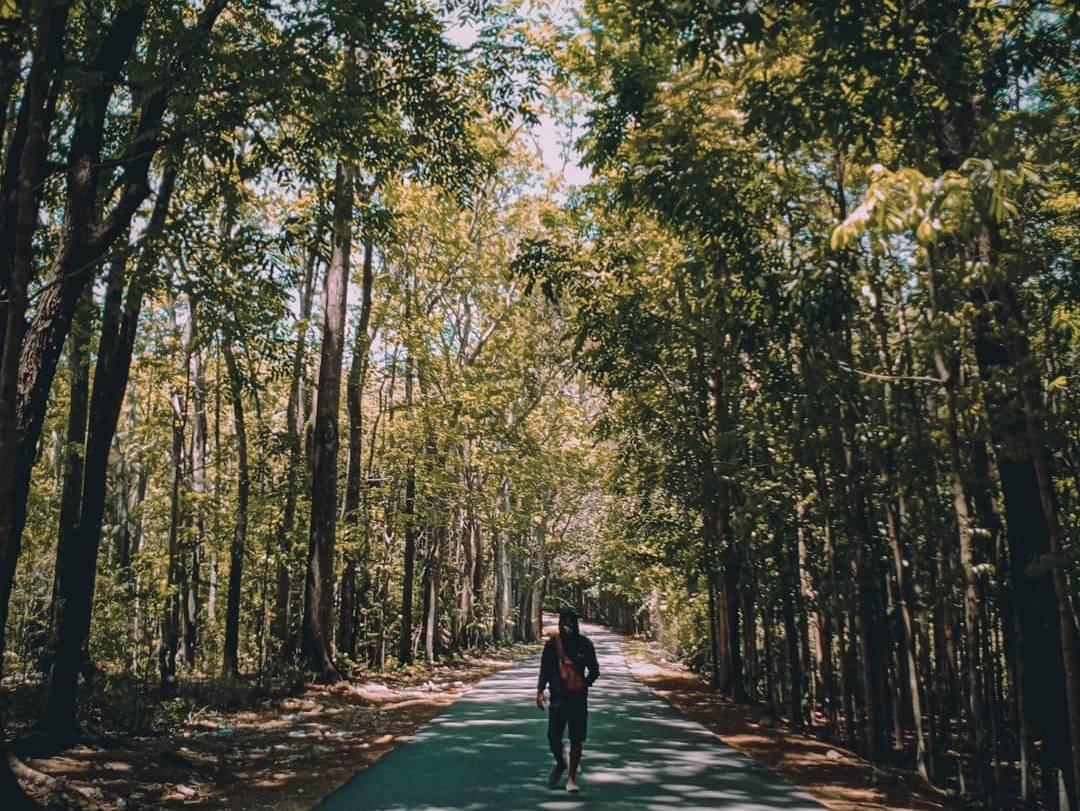 Manupeu Tanah Daru National Park Flora