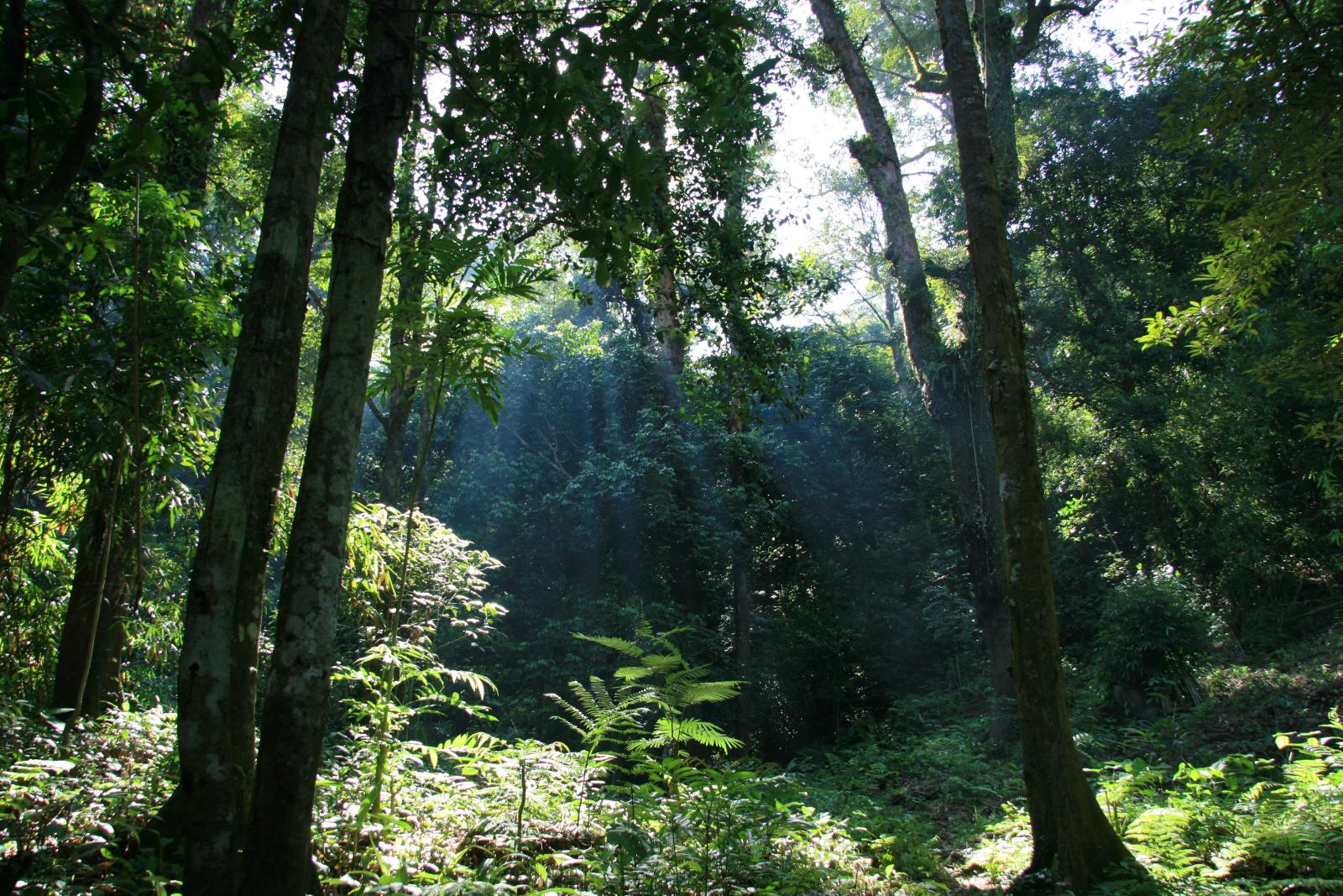 Forests in the Kerihun Betung National Park area are grouped into eight ecosystem types