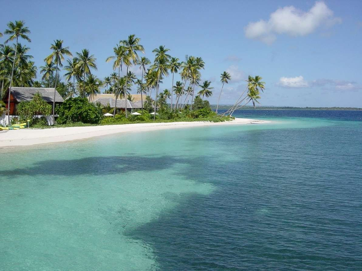 coconut trees and white sand view in hoga island