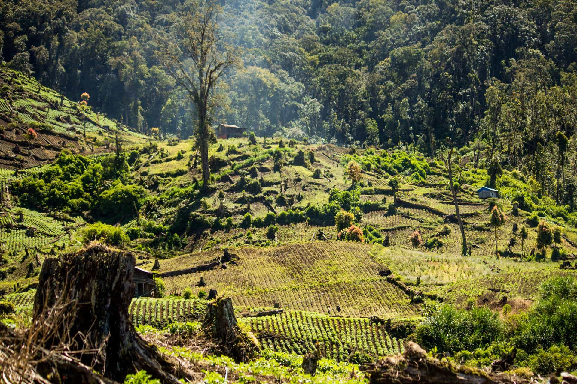 encroachment and illegal logging in kerinci seblat