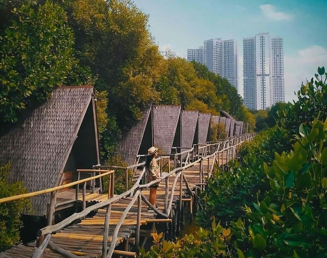 Muara Angke Mangrove Forest