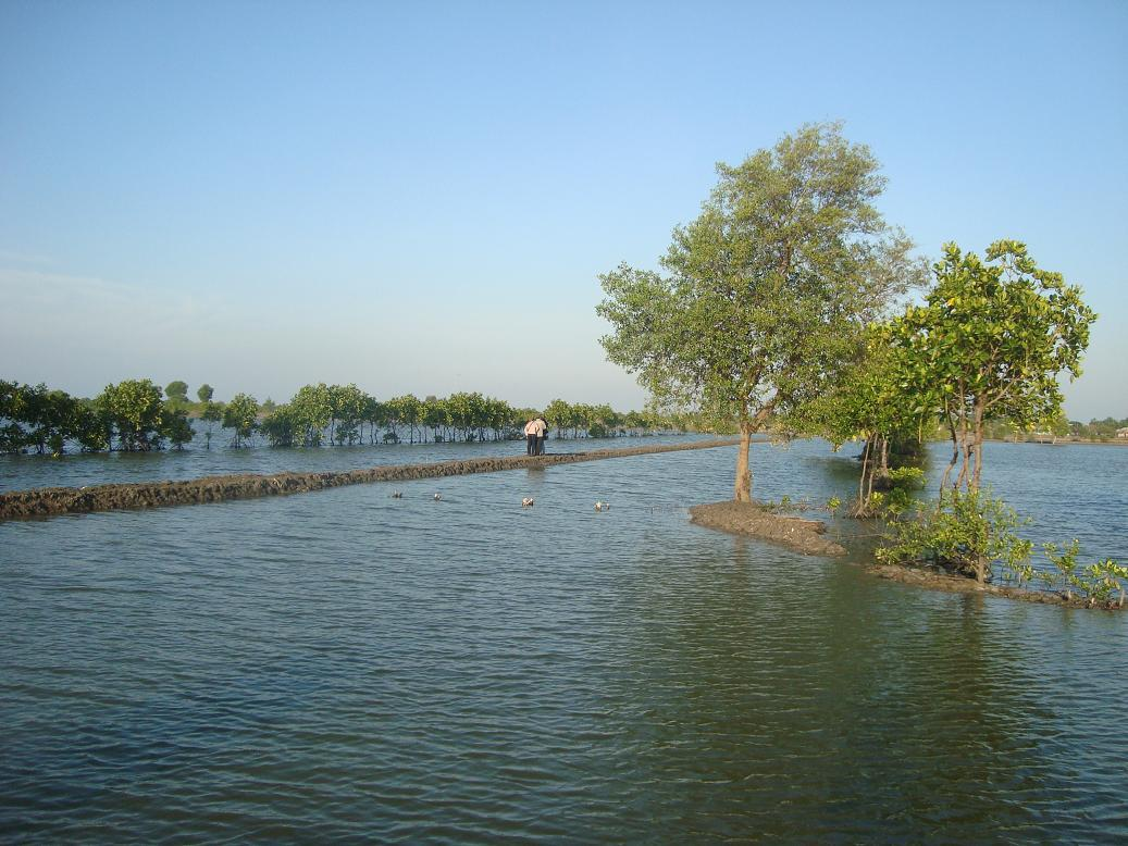 Muara Gembong mangrove forest can be said to be the lungs of Bekasi district