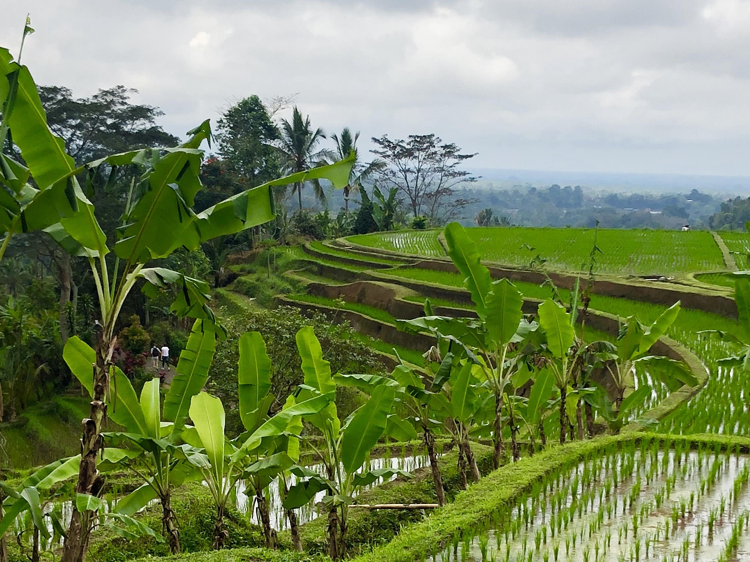 The Balinese Subak has received recognition from international agricultural experts