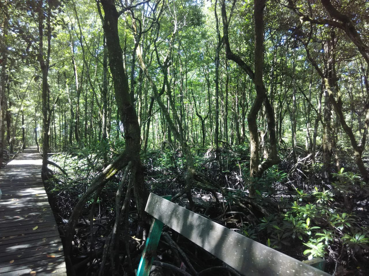 the beautiful Tarakan Mangrove Forest in east kalimantan
