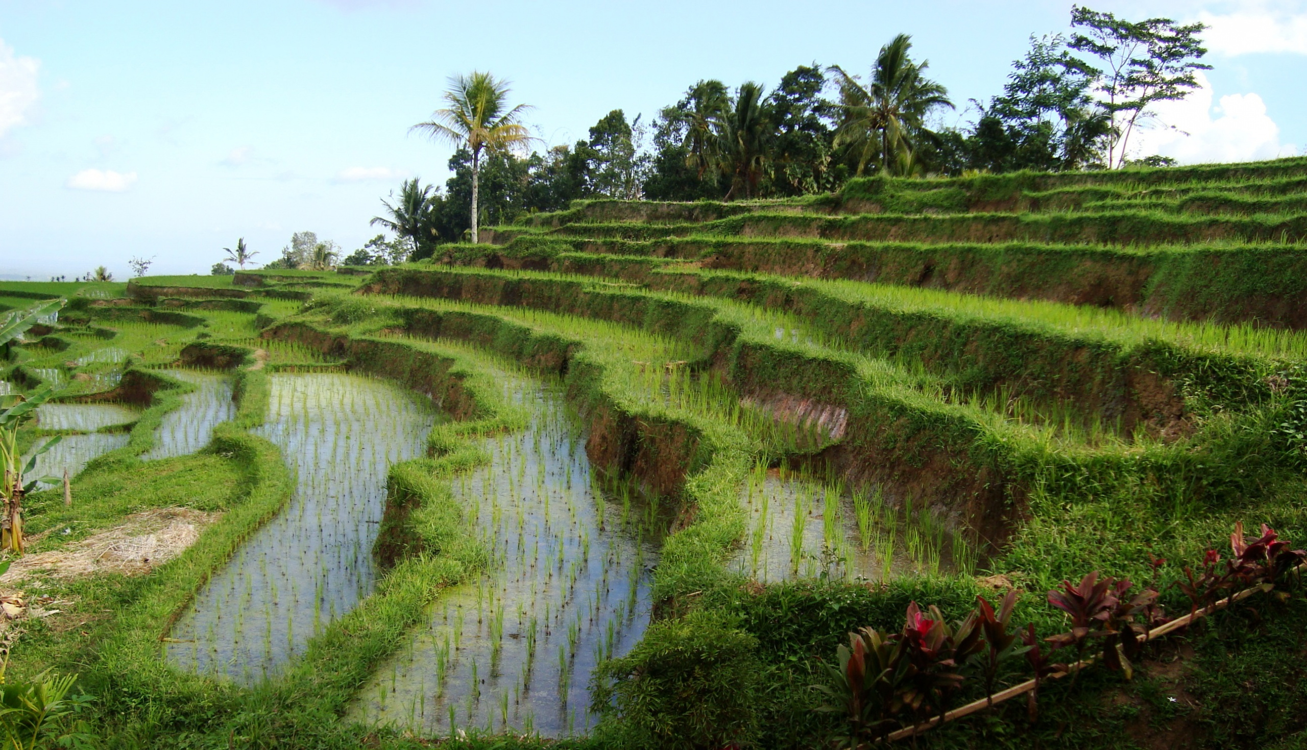 the fact about Bali Subak System